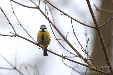 Fototriss – Fåglar